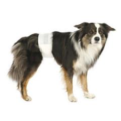 TRIXIE Pieluchy dla psów-samców 12 szt.