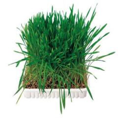 TRIXIE Trawa dla gryzoni w pojemniku 100g